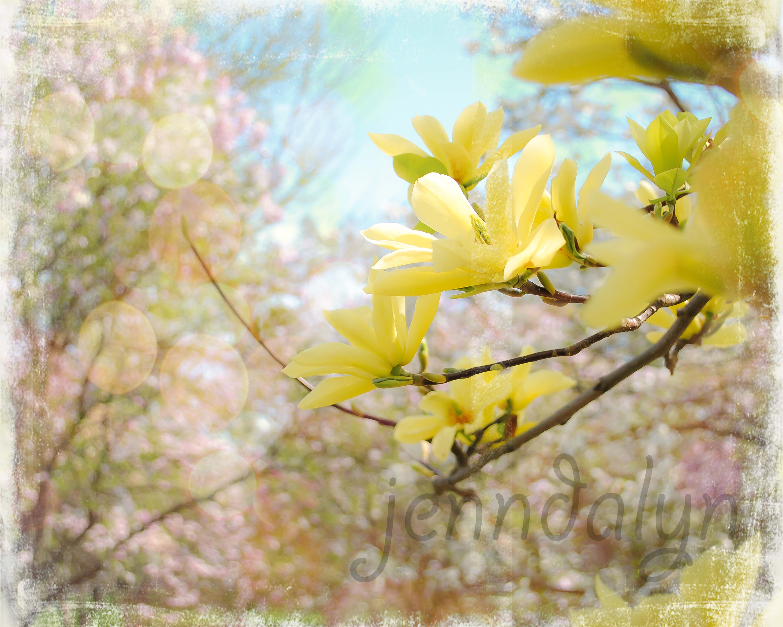 Carnival of Light - 8 x 10 fine art photograph, magnolia photography ...