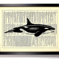 Image of Killer Whale, Vintage Dictionary Print, 8 x 10