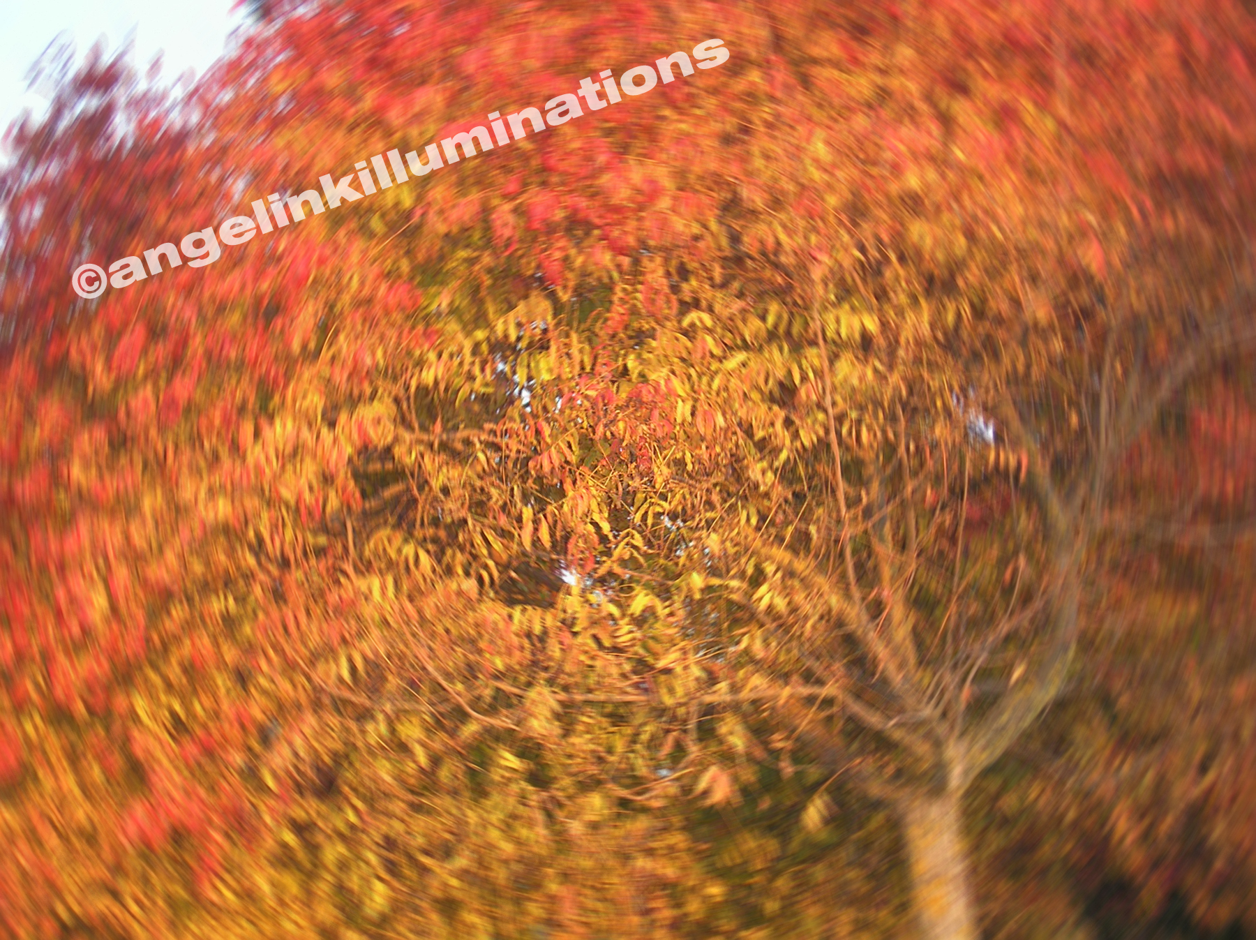 Fall_20tree_20in_20motion_original
