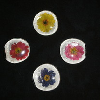 Magnet Set - Bold Flowers