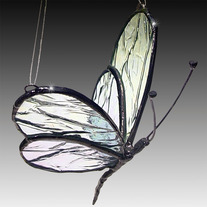 Large_20glass_20winged_20butterfly_medium