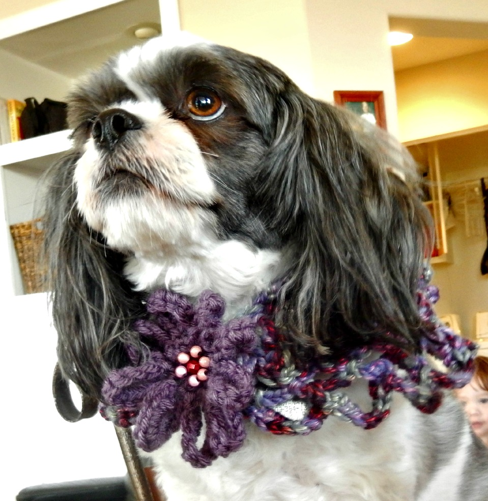 http://annabelaartistry.storenvy.com/collections/293650-hand-crocheted-pet-wear/products/2357478-hand-crocheted-dog-capelet-small-saving-graces-rescue-collection
