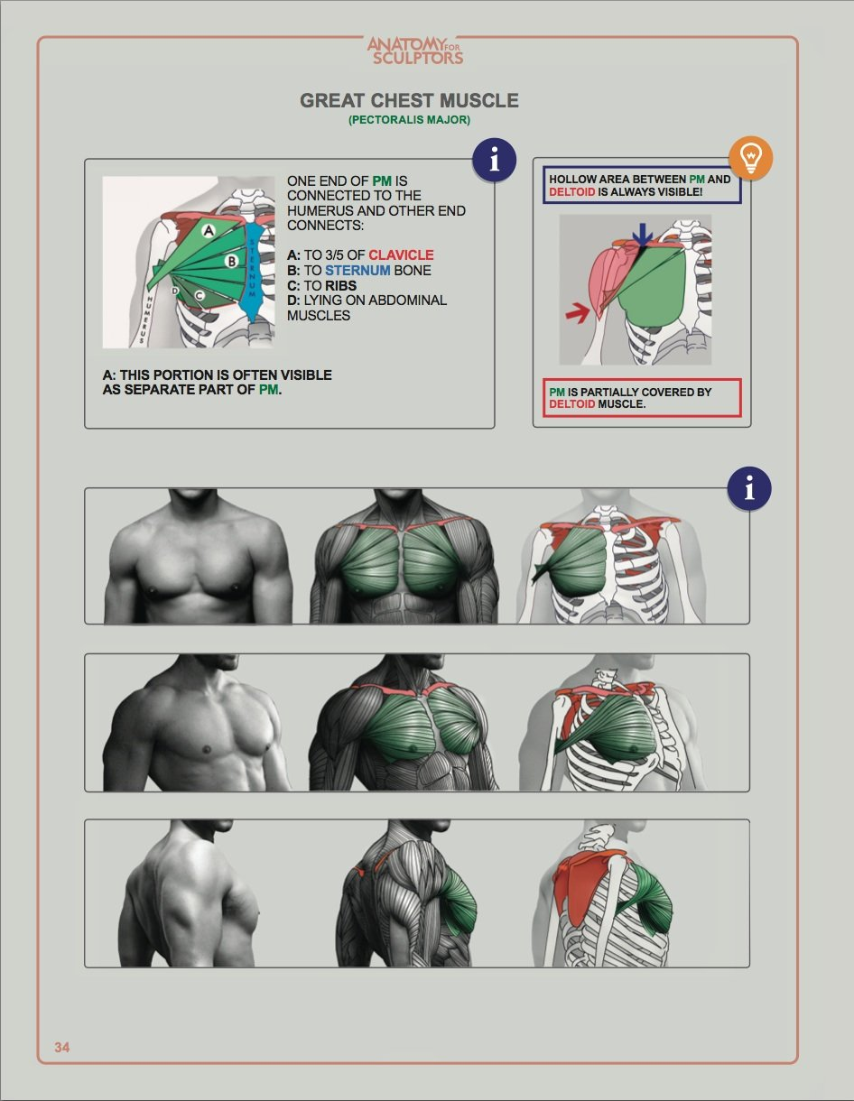 Anatomy for Sculptors, Understanding the Human Figure on Storenvy