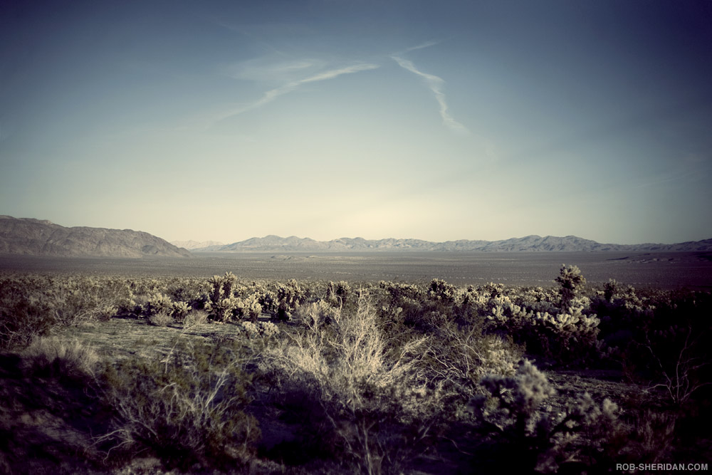 Ghosts: Joshua Tree, CA. small print (11\