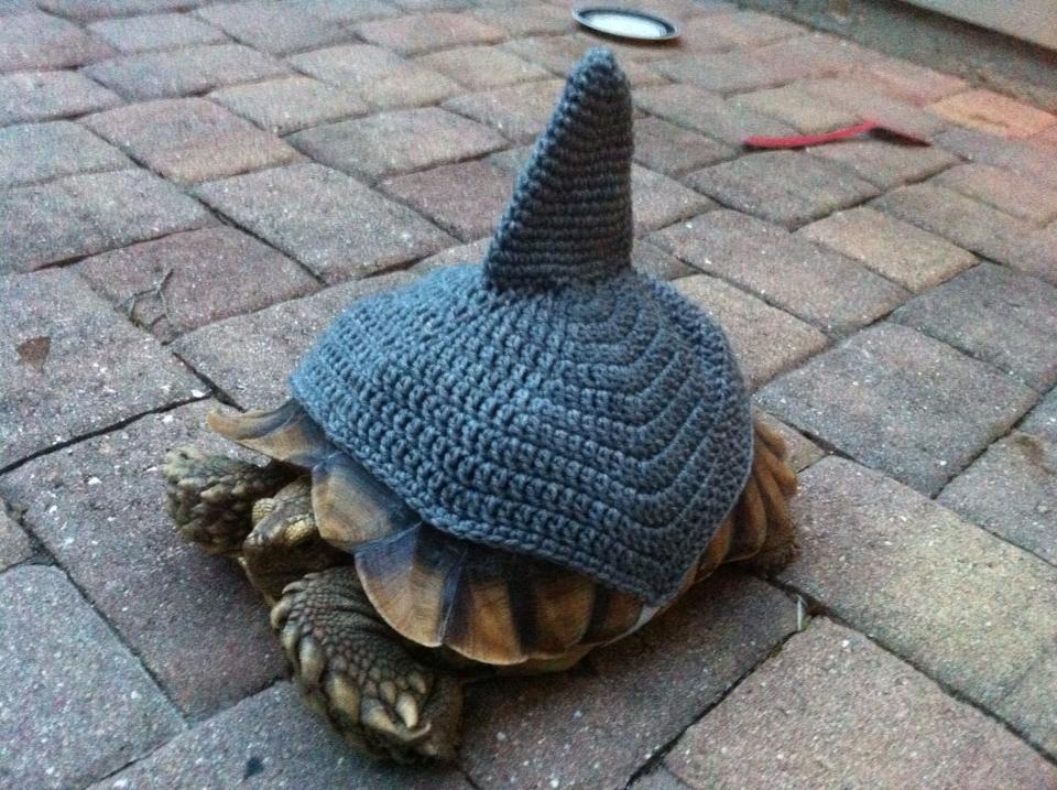 Tortoise Crochet Shark Cozy On Storenvy